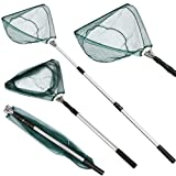 Tengma Folding Fishing Landing Net with Telescoping Pole Handle Extends to 82 Inches, Easy Catch & Release, Durable and Nylon Mesh Crab Net Foldable Crabbing Net Freshwater for Catching or Releasing