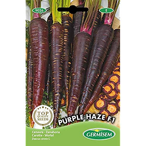 Germisem Purple Haze F1 Carota 300 Semi