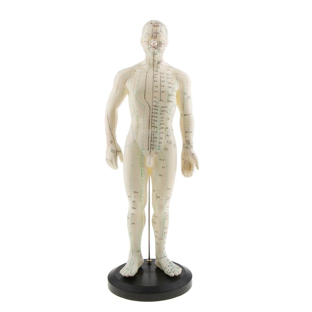不利植物の売上高Kesoto モデル 柔らかい 男性モデル 教育ツール 練習 白