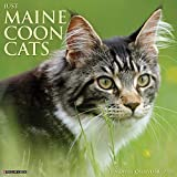 Just Maine Coon Cats 2021 Wall Calendar