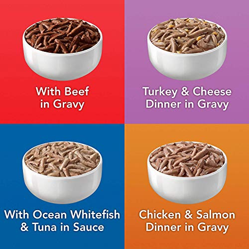 Bird | Purina Friskies Wet Cat Food Variety Pack, Shreds Beef, Turkey, Whitefish, and Chicken & Salmon – (40) 5.5 oz. Cans, Gym exercise ab workouts - shap2.com