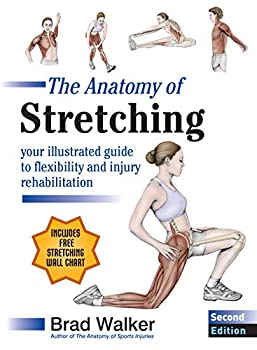 Best anatomy of stretching Reviews