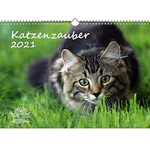 Katzenzauber DIN A3 Kalender für 2021 Katzen und Katzenbabys - Seelenzauber