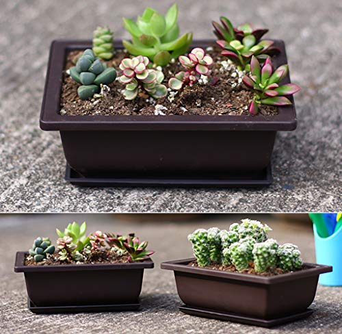 Yesland 6 Pack Bonsai Training Pots 9 Inches Classic Deep Humidity Trays With Built In Mesh Plastic Square Pot Bonsai Plants Growing Pots Buy Online In El Salvador At