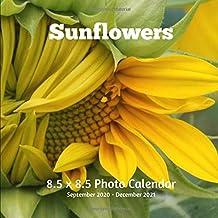 Sunflowers 8.5 X 8.5 Calendar September 2020 -December 2021: Monthly Calendar with U.S./UK/ Canadian/Christian/Jewish/Musl...