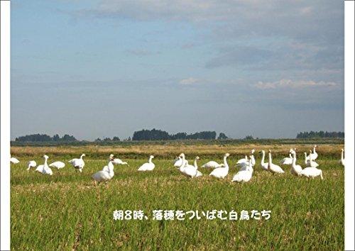 こばやし農園『特別栽培米胚芽米ミルキークイーン』