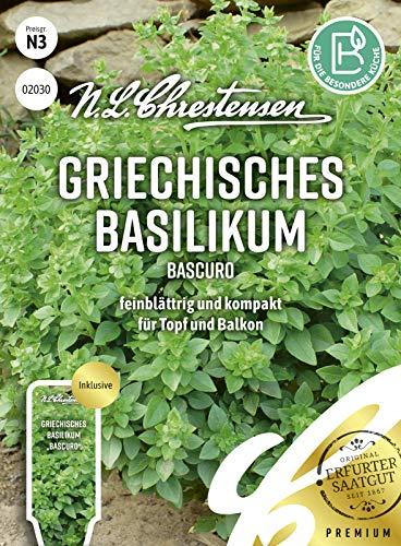 Griechisches Basilikum Bascuro, feinblättrig, kompakt, Samen