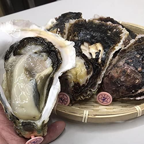 畔蛸(あだこ)の岩がき Lサイズ(200/250g)5個 [岩ガキ]