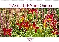 Taglilien im Garten (Wandkalender 2022 DIN A2 quer): Ein Potpourri schoener Hemerocallis (Monatskalender, 14 Seiten )
