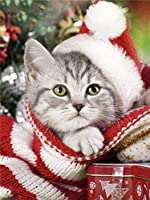 番号によるDiyペイント服の子猫の大人の子供の絵画画像デジタル絵画装飾装飾品ギフト