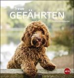 Hunde Postkartenkalender - Treue Gefährten. Postkartenkalender 2020. Monatskalendarium. Spiralbindung. Format 16 x 17 cm