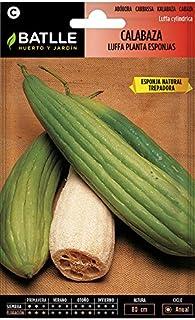 Semillas de Flores - Calabaza Luffa Planta de las Esponjas - Batlle