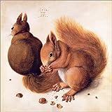 Poster 20 x 20 cm: Eichhörnchen von Albrecht