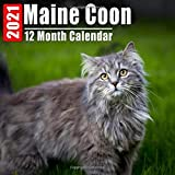 Mini Calendar 2021 Maine Coon: Cute Maine Coon Kittens Photos Monthly Small Calendar With Inspirational Quotes each Month
