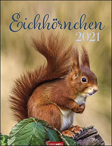 Eichhörnchen Kalender 2021
