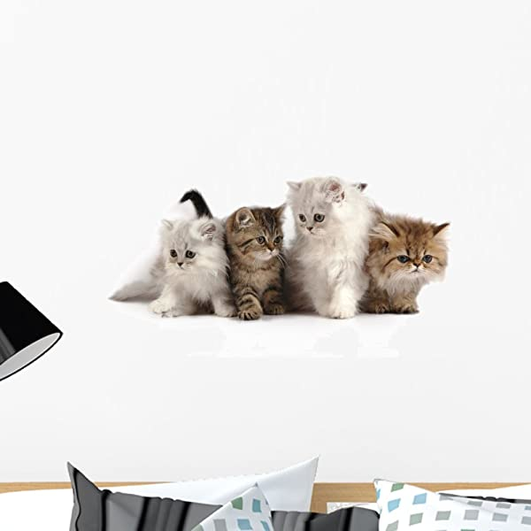Wallmonkeys WM271073 Four Little Persian Kittens Peel And Stick Wall Decals 24 In W X 14 In H Medium