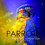 Parrots 7 x 7 Mini Wall Calendar 2020: 16 Month Calendar