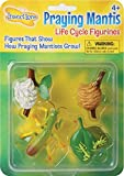 Praying Mantis 4 Piece Life Cycle Figures - 2' Bug Toys by Insect Lore