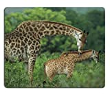 baby giraffe grooming woodland wildlife Mouse Pads Customized Made to Order Support Ready 9 7/8 Inch (250mm) X 7 7/8 Inch (200mm) X 1/16 Inch (2mm) Eco Friendly Cloth with Neoprene Rubber Liil Mouse Pad Desktop Mousepad Laptop Mousepads Comfortable Computer Mouse Mat Cute Gaming Mouse pad