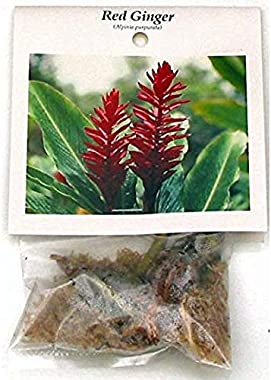 Hawaiian Tropical RED Ginger Plant Root ~ Grow Hawaii