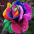 GMNP0di% Rose Seeds for Planting Multi-Color Rainbow Rose Flower Seeds Garden Plants Seeds Flower Seeds