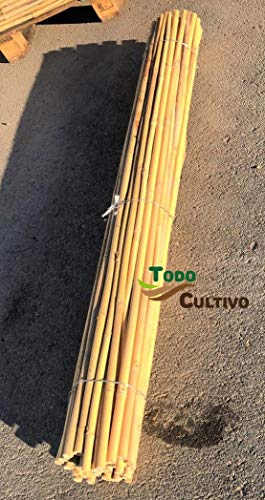 Tutor de bambú tailandés de 1,5 m. de Altura, diametro 18-20. Pack de 50 Unidades. Tutores válidos para Todo Tipo de Plantas.