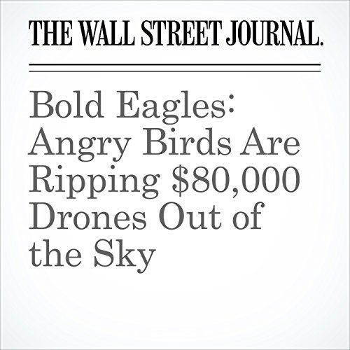 Bold Eagles: Angry Birds Are Ripping $80,000 Drones Out of the Sky copertina
