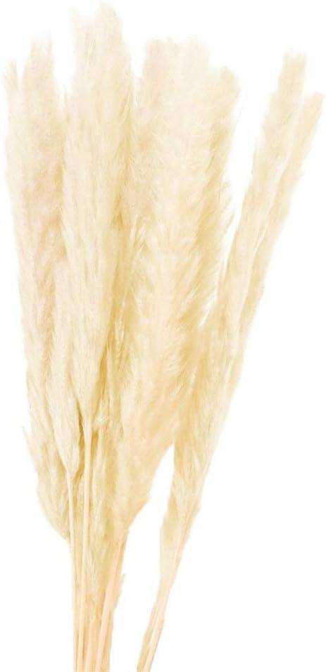 1 Bund Natur Getrocknete Bulrush Kleines Pampasgras Phragmites Reed-Anlage for Wohnkultur Color : Blau MZSC 15st