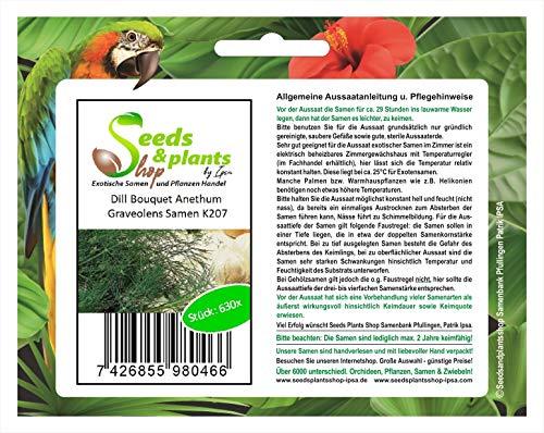 630 eneldo Anethum graveolens semillas novedad fresco jardín semillas de ramo K207
