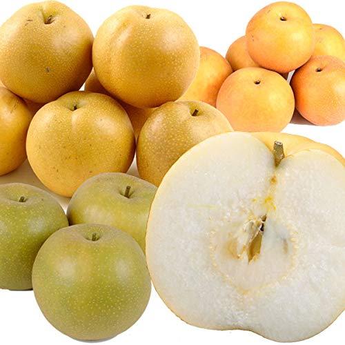 国華園 梨 山形産 ご家庭用 庄内おまかせ和梨 5kg 1箱 和梨 品種おまかせ 幸水 豊水