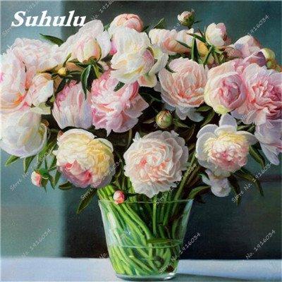 10 Pcs Pivoine graines, semences Potted extérieur, Bonsai Flower Seed, Variété complète, facile à cultiver, d'ornement-plantes pour jardin 4