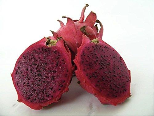 Exotic Tropical Dragon Fruit, Pitaya (Hylocereus Undatus) Organic Fruit Fresh Heirloom Seeds *Red Flesh*