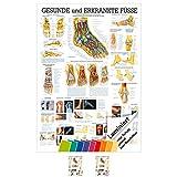 Der Fuß Lehrtafel Anatomie 100x70 cm medizinische Lehrmittel -