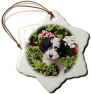 Mesllings A Havanese Puppy Dog-Us05 Zmu0281-Zandria Muench Beraldo-Snowflake Ornament, Porcelain