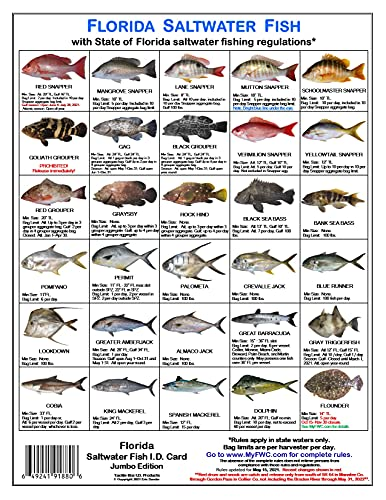 Tackle Box I.D. Florida Saltwater Fish Identification Card Set - Three Doublesided Waterproof Cards Showing 60 Common Fish and 17 Sharks in True-to-Life Photographs with Current FWC Rules and More.