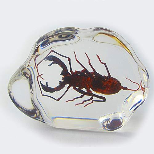 DC Wesley Harz Epoxy Schmuck Acryl Tisch Dekoration Konferenz Geschenk Naturharz Dekoration (Color : Dragonfly)