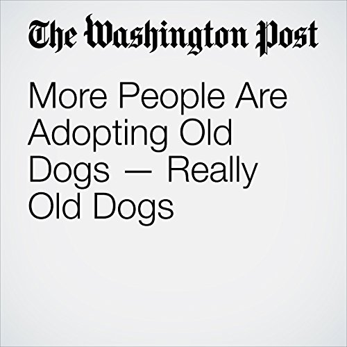 More People Are Adopting Old Dogs — Really Old Dogs copertina
