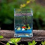 N\A AY Mini Tanque de Pescado, Tanque de Pescado Cuadrado, Tanque de Pescado Creativo, Tanque de Pescado ecológico de Oficina de Oficina, Tanque de Algas (Size : 10 * 10 * 15cm)