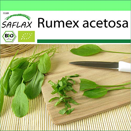SAFLAX - BIO - Sauerampfer - 400 Samen - Rumex acetosa