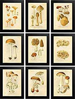 Ink Inc Botanical Prints Edible Mushrooms Vintage Drawings Wall Ar t - Set of 9 - 5x7 Matte Unframed