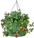 HIT Corp. 8495E SA Floral Hanging Metal Strawberry, herb, Flower Planter, Sage
