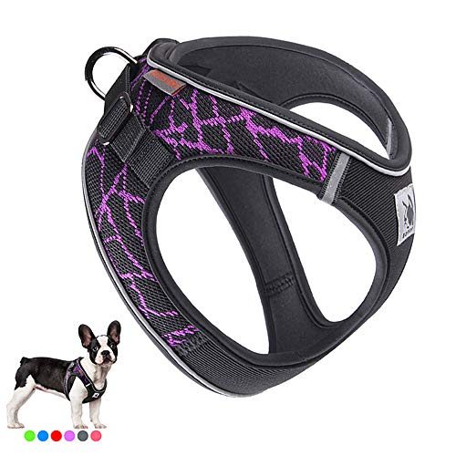 Put on Dog Harness