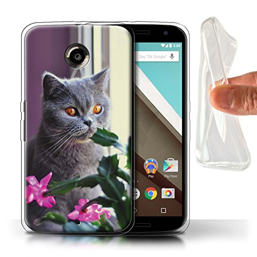 Stuff4 Gel TPU Hülle/Case für Motorola Nexus 6 / Britisches Blau/Kurzes Haar Muster Katze/Katzenrassen Kollektion