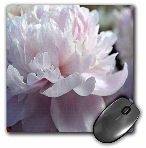 3Drose 8 X 8 X 0.25 Inches Mouse Pad Soft Pink Peony Flower (mp_51022_1)