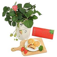 花由 母の日 贅沢いちご三昧 いちごの鉢植え と スイーツ セット