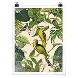 Bilderwelten Poster Vintage Collage Papageien im Dschungel