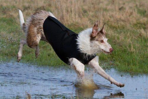 Neopreen hond wetsuit jas - maten voor de meeste rassen, L2, Zwart