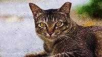 数字キットによるDIY油絵アクリルキャンバス家の壁の装飾大人のためのペイントワークス初心者-猫の顔の目悲しみストライプ40×50cm(フレームレス)
