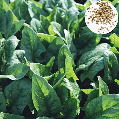 Dyyicun12 500 Stks Spinazie Zaden, Voedzame Plantaardige Thuis DIY Tuin Boerderij Plant