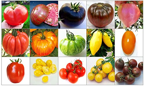 150 GRAINES de TOMATES RARE et RICHE en NUTRIMENTS COLLECTION de 15 VARIETES: TOMATE GéANT ITALIENNE, CHEROKEE PURPLE, NOIRE DE CRIMEE, BRANDYWINE NOIR, COEUR ROSE, COSTOLUTO FIORENTINO, PINEAPPLE, GREEN ZEBRA, BANANA LEGS, ORANGE STRAWBERRY, ROMA, YELLOW PEAR, CERISE ROUGE, CERISE GOLD et CERISE NOIRE